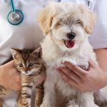 Little dog and cat at the HSMC vet