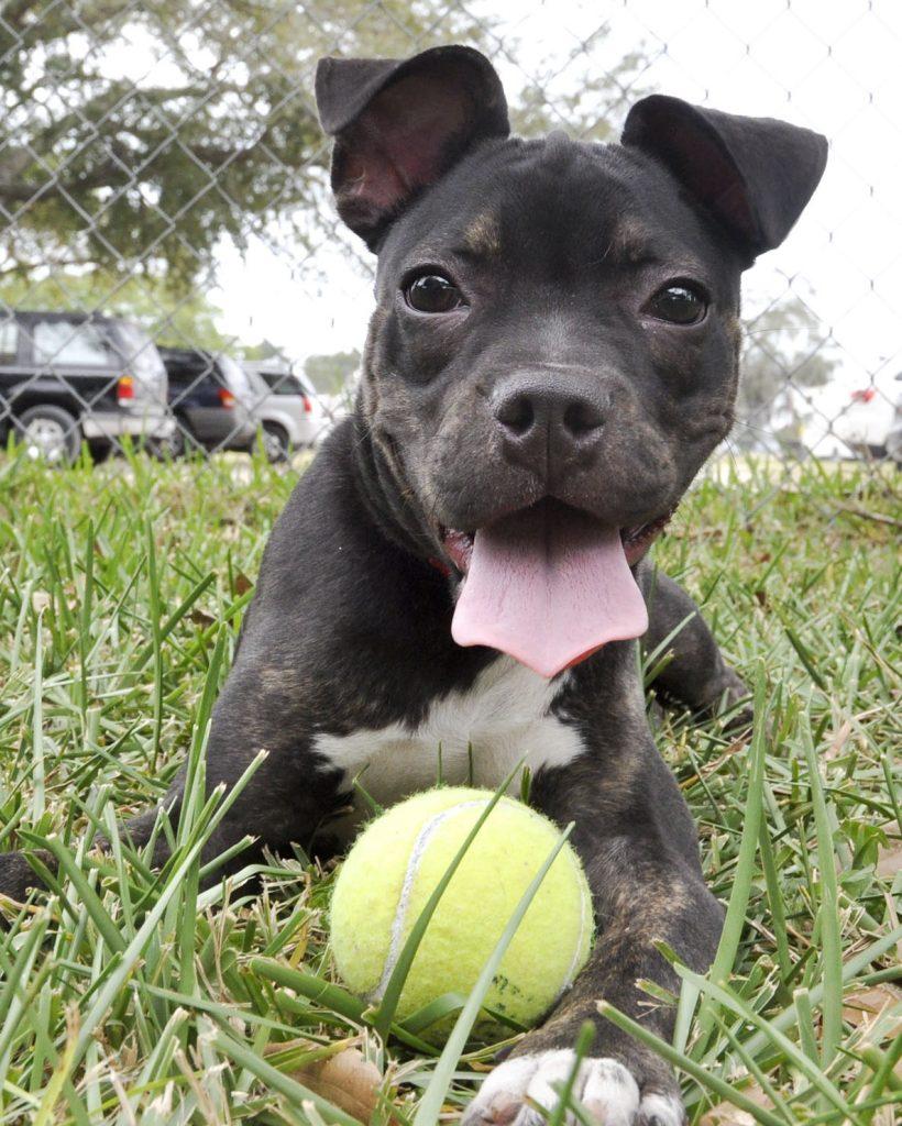 Nuestro Programa de Adopciones para una Segunda Oportunidad acepta perros y gatos de todas las edades, tipos y tamaños.