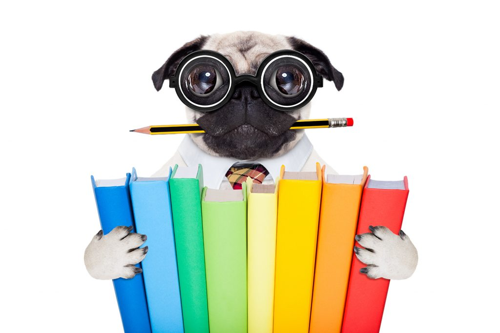 cool school pug dog, with stack of books and pencil in mouth ,isolated on white background