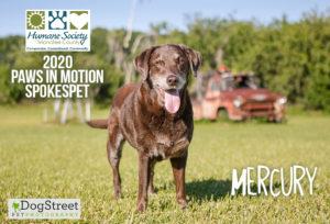 2020 Paws in Motion spokesdog Mercury
