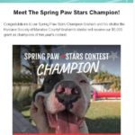 picture of Graham dog who won the spring paws stars contest