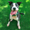 Leah the dog up for adoption