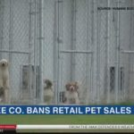Manatee County bans retail sales of dogs and cats
